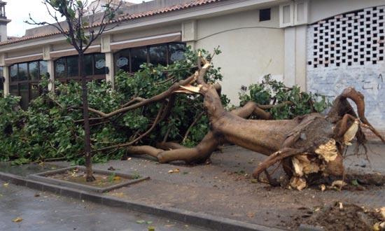 La fuerza del viento ha tumbado varios árboles en Torremolinos