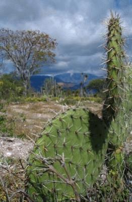 México es el país hispano hablante más grande del mundo, con 31 estados, además de la capital
