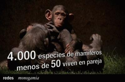 http://www.rtve.es/files/74-125783-FOTO_NOTA_PRENSA_399/ImagenesMamiferos.jpg